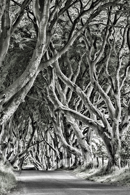 The Studio David Pauley Misc photography Dark Hedges