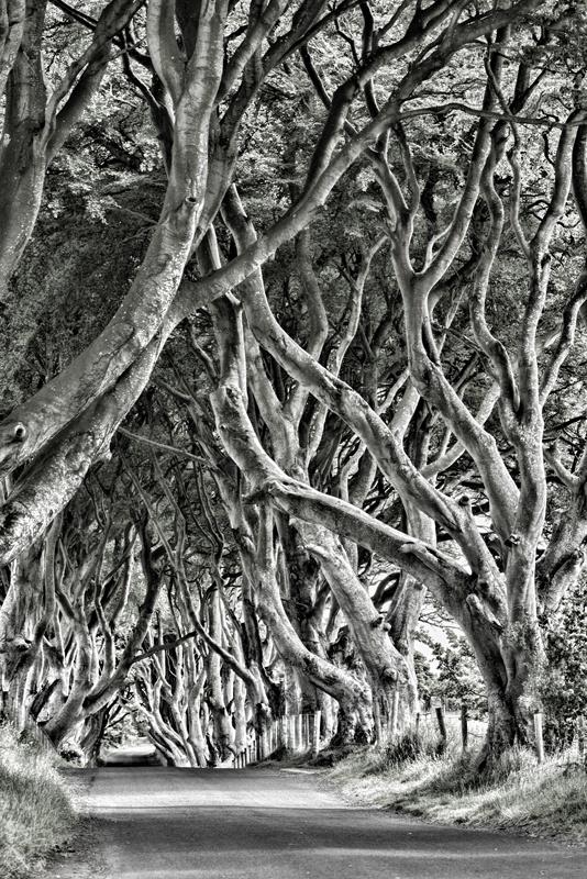 The Studio David Pauley Misc photography Dark Hedges